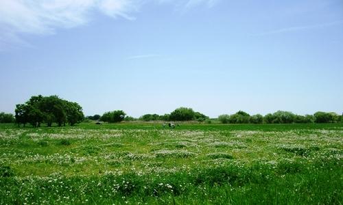 MAY 2011 FO.JPG